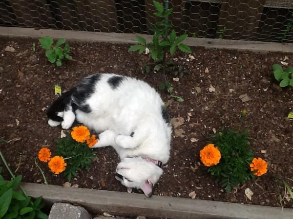 Mitzi in flower garden