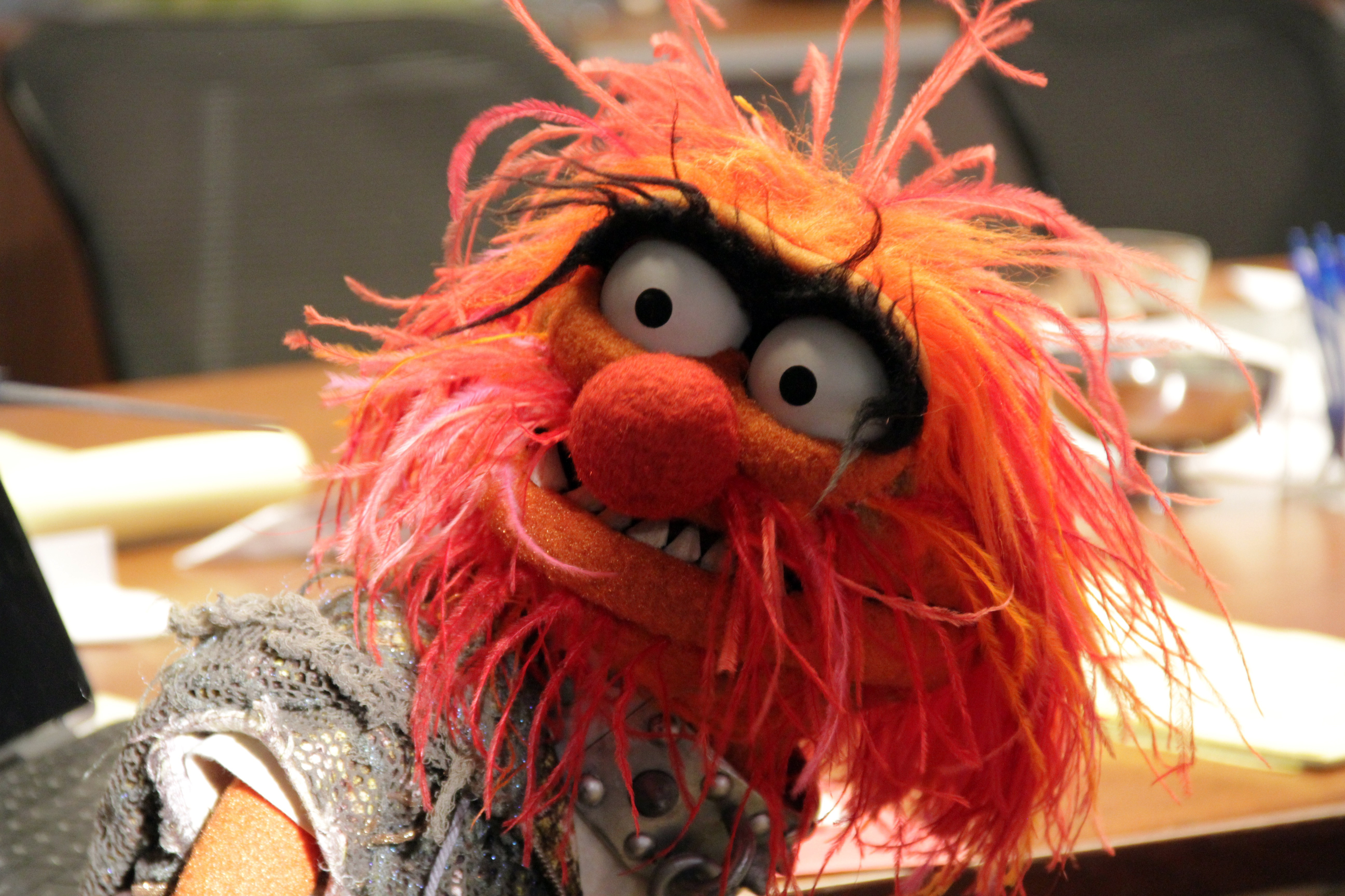 First images from the muppets anibundel - Animal muppet images ...