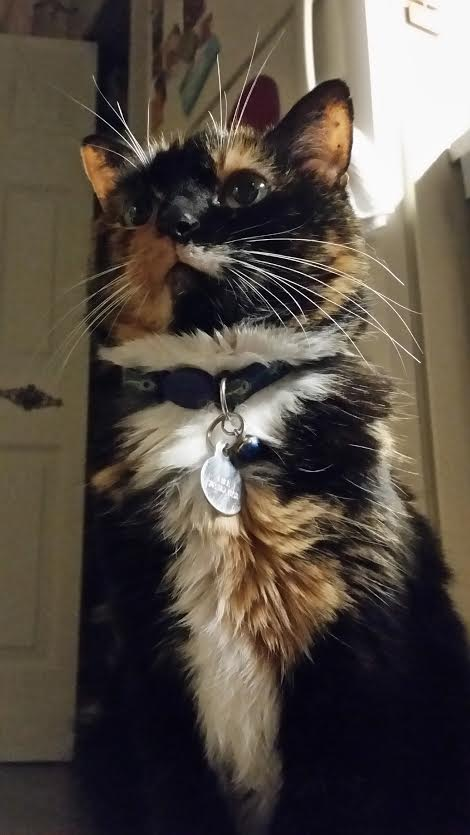 pres purrbot