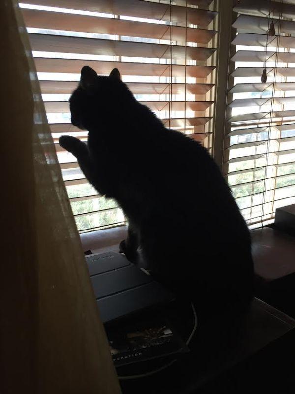 windowwaiter