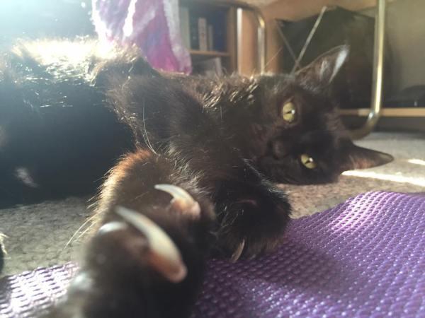 claw selfie